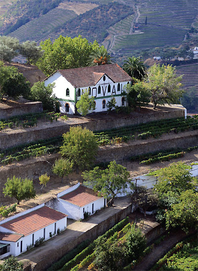 Quinta do Noval - One of the major historic Port houses, renowned for its great Vintage Ports, old Tawnies and since 2006, for its Douro wines