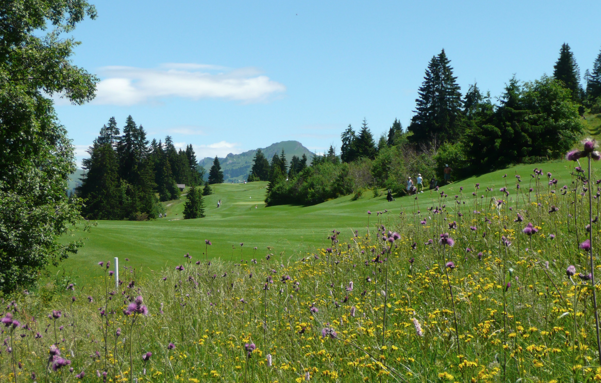 The Hills are Alive: Wildflowers fill the alpine meadows around Gstaad during the summer months